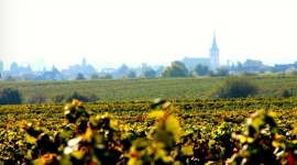 Thumbnail image for Culinary Travel to Europe: Part 2, A day on the German Wine Road