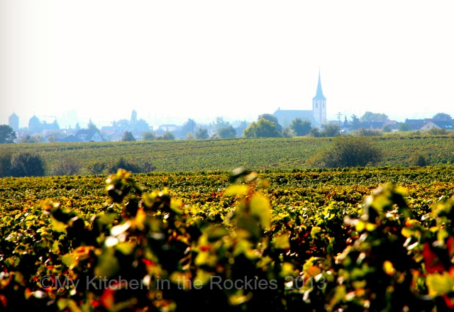 Along the German wine road